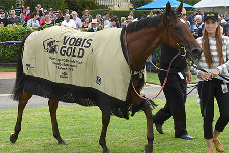 If Not Now When – 2015 Inglis VOBIS Gold Sale – $15,000