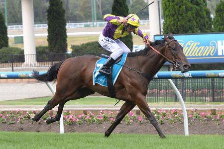 Rocky Boomboa – 2014 Inglis Melbourne Premier Sale – $36,000