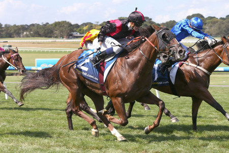 See Me Flash – 2013 Inglis Melbourne Premier Sale – $80,000